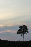 Tree in evening at North, Thailand. Tree whit sky in evening at North, Thailand Royalty Free Stock Photography