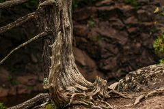 Tree with exposed roots on a hike in northern Minnesota. Cliff hanging tree with exposed roots alongside a hiking trail in near Minnesota`s north shore. Taken on Stock Photo