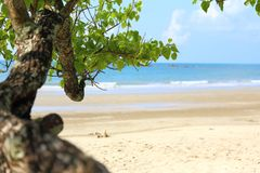 The tree extends into the beach. Royalty Free Stock Photos