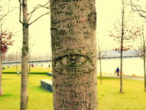 Tree with eye Stock Images