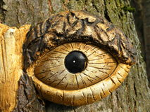 Tree eye Stock Photo