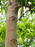 Tree eyes Royalty Free Stock Images