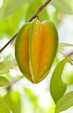 tree för äpplefruktstjärna Royaltyfri Bild