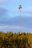 tree för överlevande för brandskog indestructible royaltyfri bild
