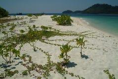 tree för 2 strand Fotografering för Bildbyråer