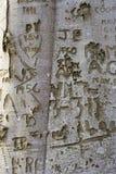 tree för 3 grafitti Arkivbilder