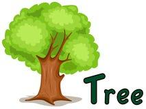 tree för alfabet t Arkivbild