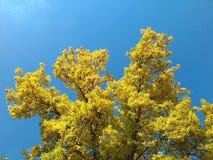 tree för bakgrundslakemichigan sky Arkivbilder