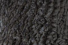 tree för bakgrundsskälltextur Arkivfoton