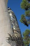 tree för bildskärm för askaspökeödla Royaltyfri Fotografi