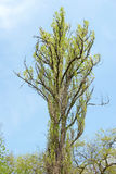 tree för blå sky arkivfoto