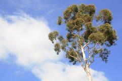 tree för blå sky Royaltyfria Foton