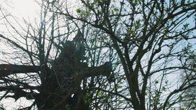 tree för blixtslag stock video