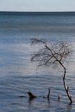 tree för dött hav Arkivbild