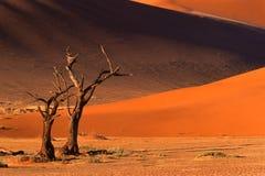 tree för dynnamibia sossusvlei Royaltyfri Fotografi