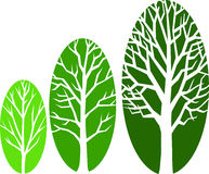 tree för eps-tillväxtovals Arkivbild