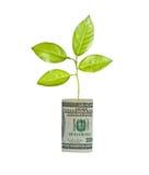 tree för for för billdollar växande Royaltyfri Fotografi