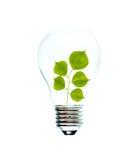 tree för for för glödande lampa för kula royaltyfria bilder
