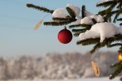 tree för filialgarneringgran Fotografering för Bildbyråer