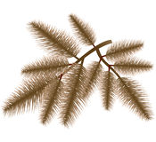 tree för filialjulpäls Arkivfoton