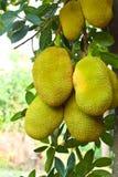 tree för fruktträdgårdstålar Royaltyfri Foto