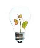 tree för glödande lampa för kula royaltyfria bilder