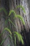 tree för gräslivstid fortfarande Arkivfoton