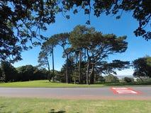 tree för green tre Arkivfoto