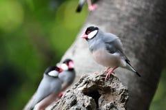tree för håljava sparrow Royaltyfri Bild