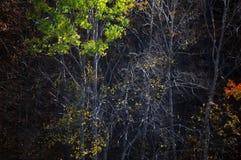 tree för höstbakgrundsblack Royaltyfria Bilder
