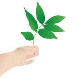 tree för handholdingleaf Arkivfoton