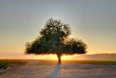 tree för hdrbergsolnedgång Arkivfoto