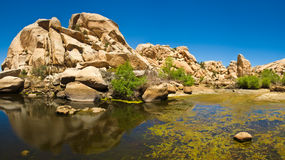 tree för inkastarefördämningjoshua nationalpark arkivbild
