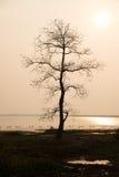tree för kanalösolnedgång fotografering för bildbyråer