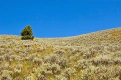 tree för kull en fotografering för bildbyråer