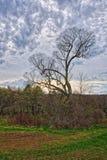 tree för kull en arkivfoto