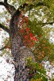 tree för kurvor för höstfilial färgrik uppåt Royaltyfri Foto