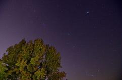 tree för nattsky Arkivfoton