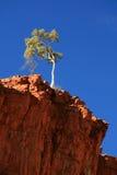 tree för ormiston för Australien klyfta lone royaltyfria foton