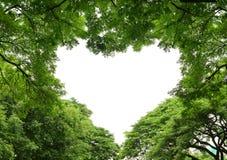tree för ramhjärtaform arkivfoto