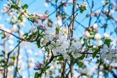 tree för red för pears för pear för bakgrundslövverkgreen arkivbilder