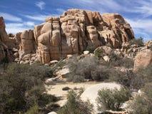 tree för rock för bildandejoshua nationalpark Royaltyfri Bild