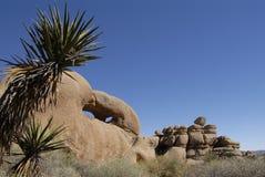 tree för rock för calibildandejoshua nationalpark Royaltyfria Bilder