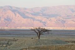 tree för rock för foto för ökenjordan petra Royaltyfri Foto