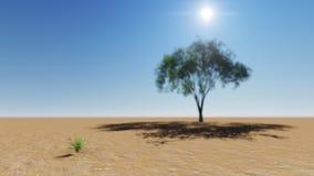tree för rock för foto för ökenjordan petra Royaltyfria Bilder
