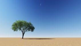 tree för rock för foto för ökenjordan petra Arkivfoton