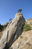tree för rock för pelare för crimea liggandeberg Royaltyfria Foton