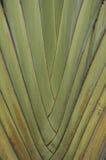 tree för s-texturhandelsresande Royaltyfria Foton
