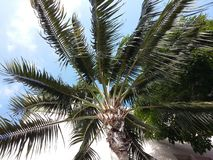 tree för skognaturbana royaltyfria bilder