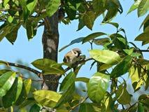 tree för sparrow för eurasianmontanusförbipasserande Arkivfoton